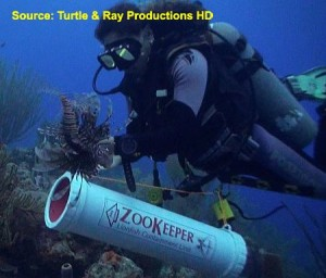 Lionfish Hunting with a ZooKeeper