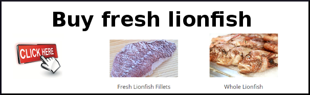 Buy fresh lionfish here
