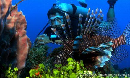 ¿Porqué los peces león son considerados un problema?