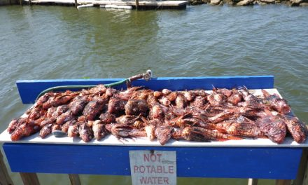 FWC approves plan to allow one extra lobster for 10 lionfish during Florida mini-season