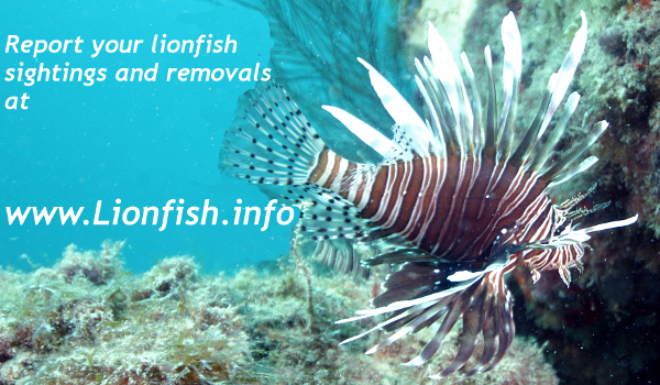 Largest Lionfish Contest for entire range of invasive lionfish