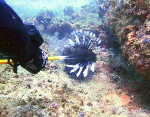 best angle to spear a lionfish best tips for hunting lionfish