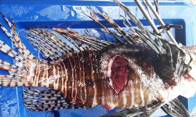 Something is making the lionfish sick, and scientists are not sure why