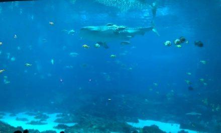 lionfish visit the Georgia aquarium